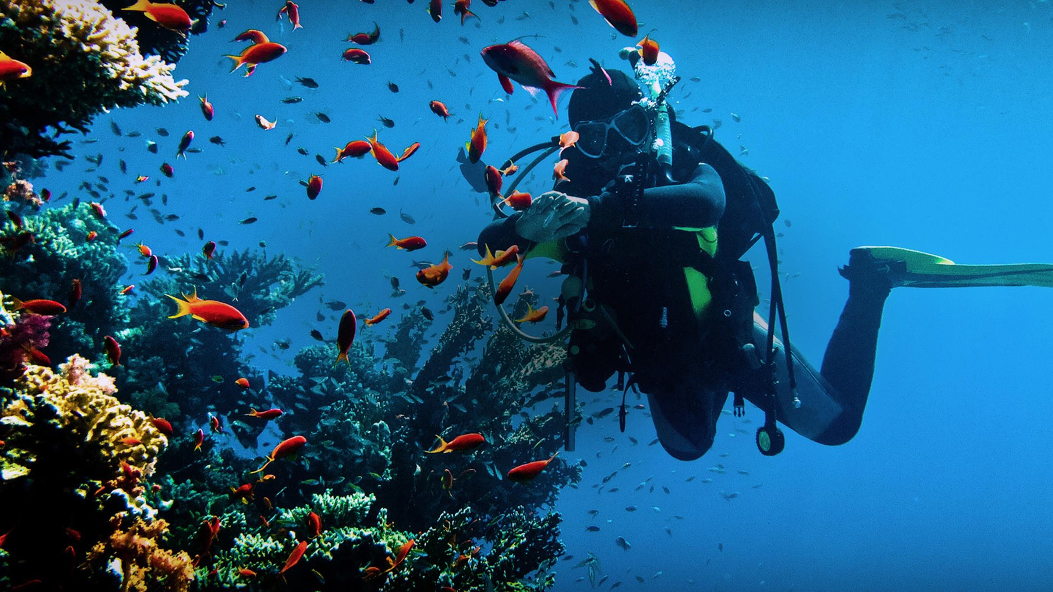 Diving sites in Sardinia.