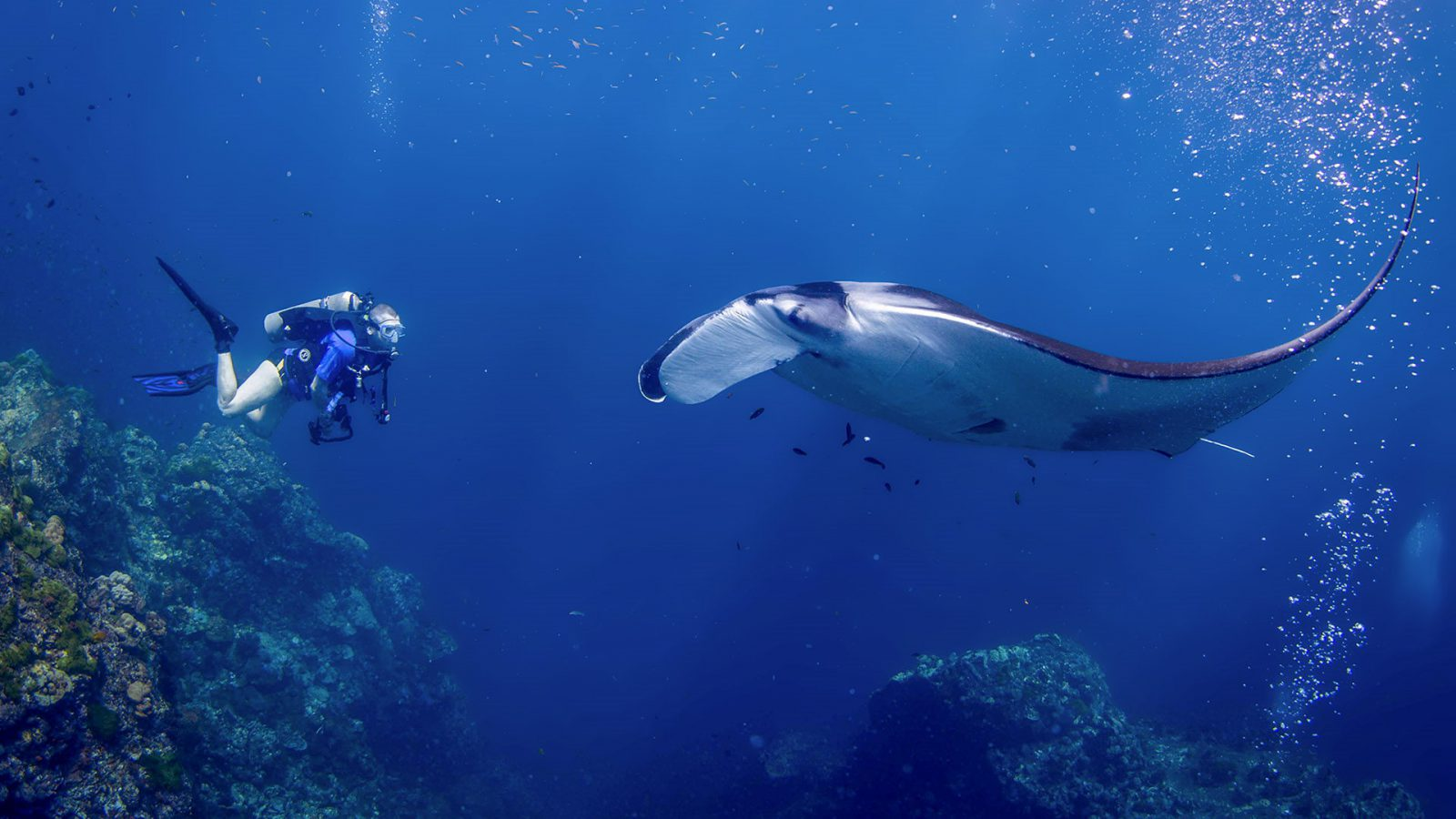 Discover Phuket's Coral Reefs