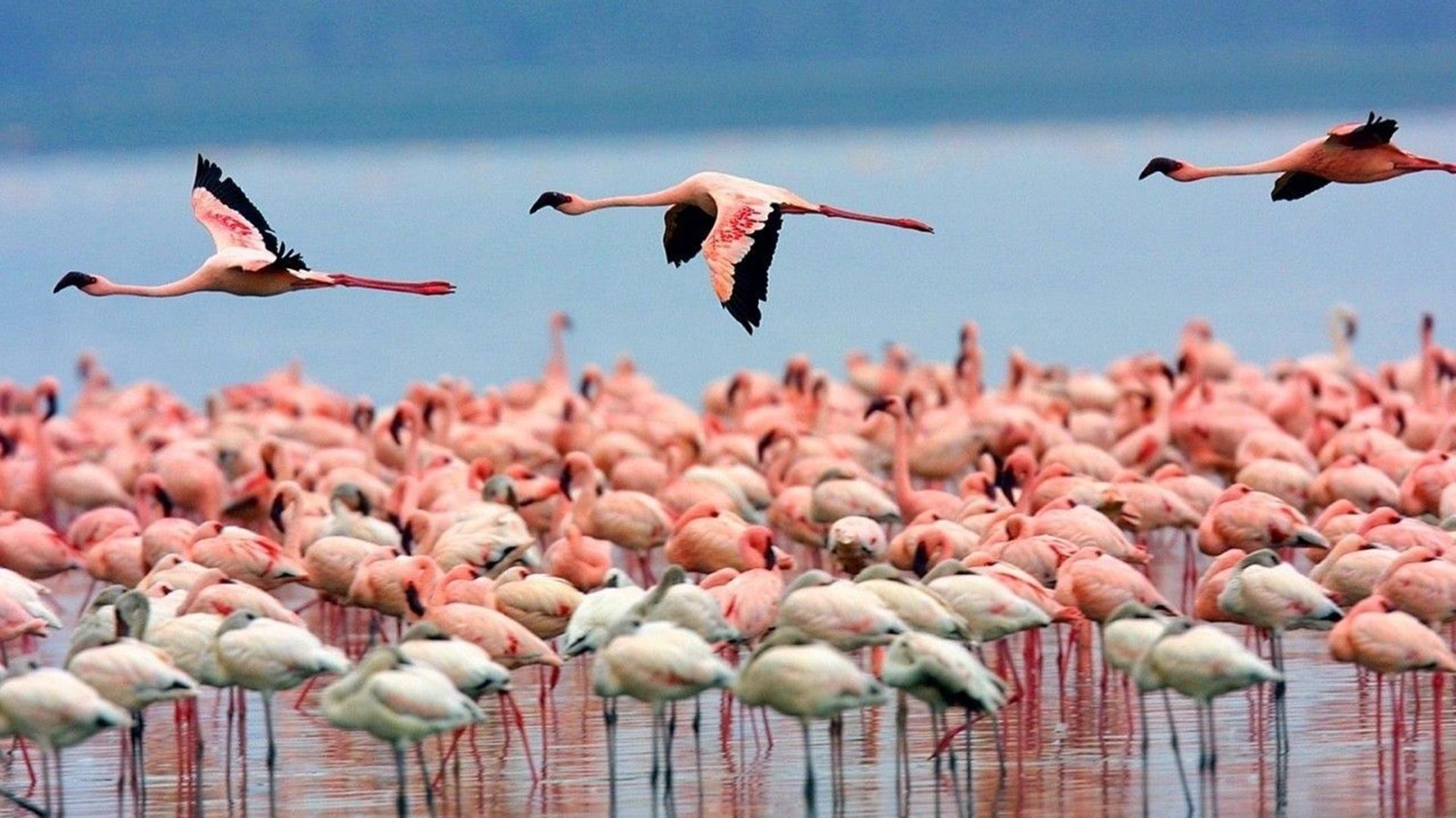 Photograph of the week: Flamingos at Olbia, Sardinia