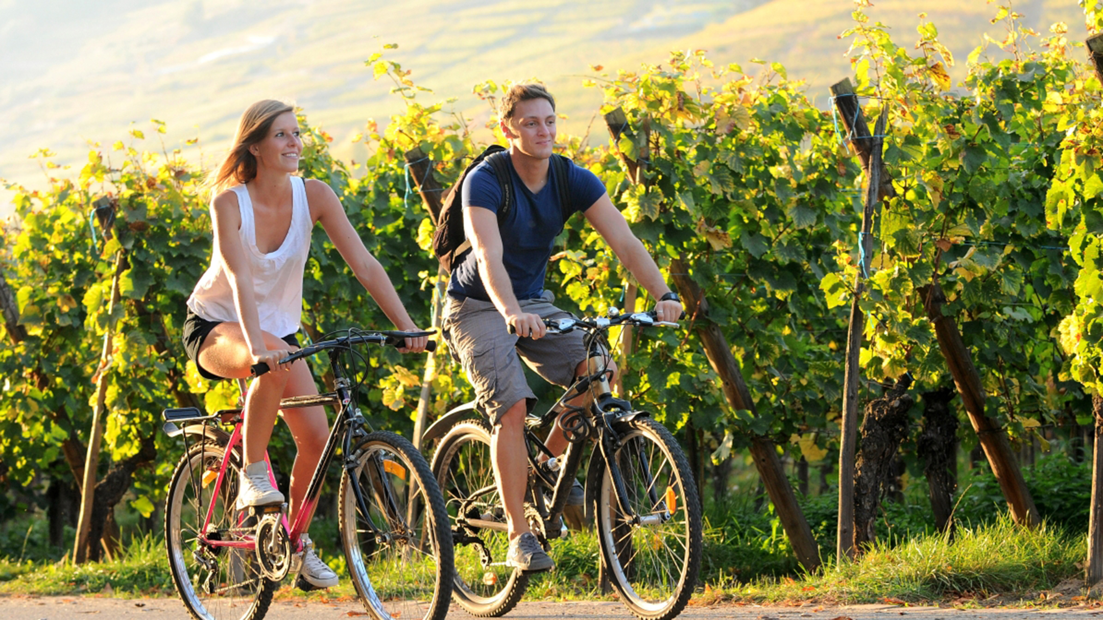 Bike routes combined with wine tourism